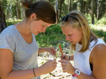 Image 5: Graduate students at MOSS learning how to count the age of a tree from an increment borer.