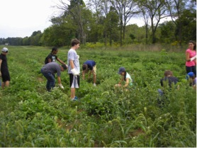 Fieldwork at an Organic Farm