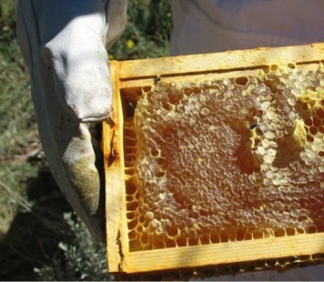 Honey harvested from college beehives managed by the author and students.