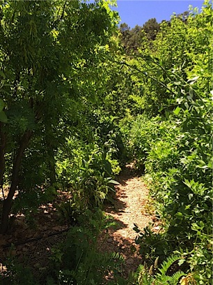 The forest garden at CRMPI, a truly lush, multistoried, polyculture landscape.