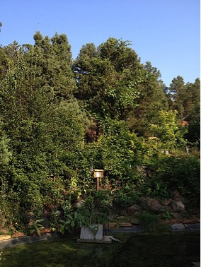 "The multi-storied forest garden at CRMPI ""stacked"" into a hillside by the pond."